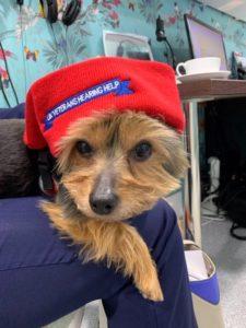 Mascot Louis Models UKVHH Hat