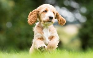 Let's not take things for granted Part 5 – A puppy is not just for Christmas